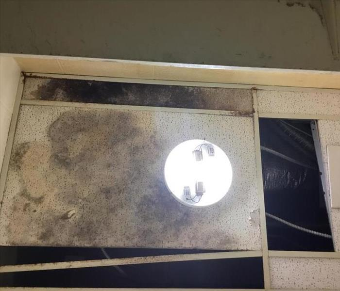 ceiling tile with mold growth