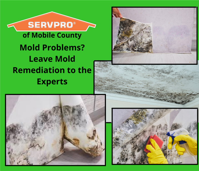 Mold Experts- SERVPRO of Mobile County